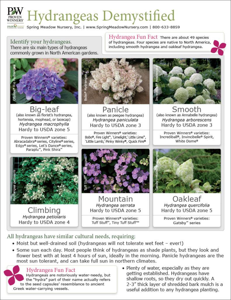 Hydrangeas Great Scapes Nursery